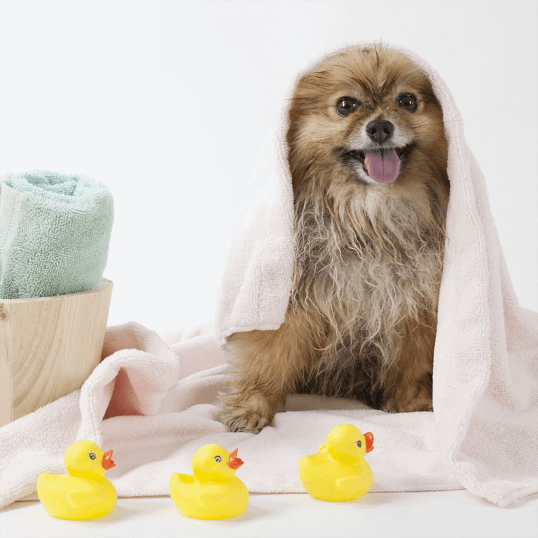 Dog In Towel After Bath