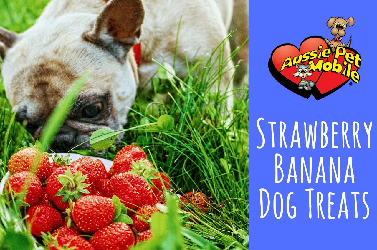 Strawberry Banana Dog Treats Aussie Pet Mobile River Oaks