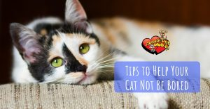 Tips To Help Your Cat Not Be Bored