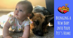 Bringing A New Baby Into Your Pet's Home