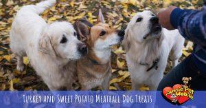 Turkey And Sweet Potato Meatball Dog Treats