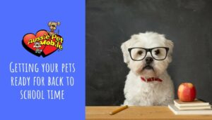 Getting Your Pets Ready for Back-to-School Time-Aug-2021